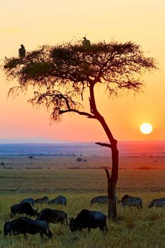 The 12 Best Hikes In South Africa You Have To Experience Sunrise Photography, Landscape Photography, Nature Photography, Watercolor Landscape, Landscape Paintings, Best Hikes, African Safari, Belle Photo, Beautiful Landscapes