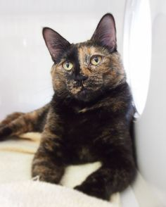 Featured animal: Muna (ID #371596) available at our Surrey Branch. Click picture to learn more.