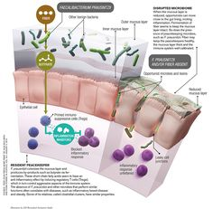 How Microbes Keep Us Healthy [Infographic] - Scientific AmericanHow Microbes Keep Us Healthy [Infographic] The gut houses trillions of microbes. Here's what they do