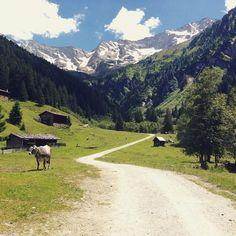 #tirol #valsertal #vals #austria #nokangoorosjustmuhlikuhs #beautifulcountry #sun #mountains #bluesky #cow #trees #iloveaustria