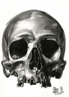 Skull - Sketch with pencil from photo