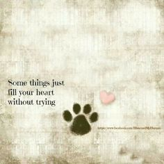 Cat Love, I Love Dogs, Puppy Love, Cat Quotes, Animal Quotes, Dog Quotes Love, Crazy Cat Lady, Crazy Cats, Pet Loss