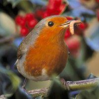 Wie eet wat (en wanneer)? - welk vogelvoer voor welke vogel - handig schema
