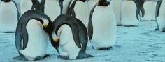 79 fatos malucos que vão mudar seu jeito de ver o reino animal