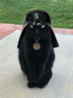 PetsLady's Pick: Funny Vader Cat Of The Day...see more at PetsLady.com -The FUN site for Animal Lovers