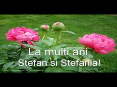 Free entertainment and learning videos - Clip Ready Happy Valentine's Day Friend, Happy Name Day, La Multi Ani Constantin, Happy Valentines Day, Beautiful Flowers, Entertaining, Motivation, Happy, Flowers
