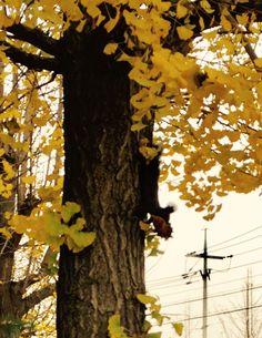 ... und täglich grüßt das Eichhörnchen 😉