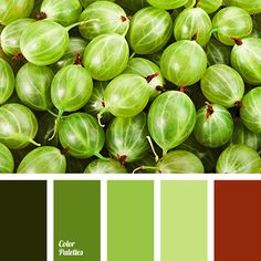 brown-red color, color of fresh greens, dark green color, green and lime colors, green color, green shades, lime and grass colors, maroon color, pale lime color, summer colors.