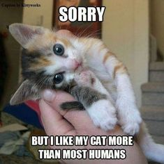 Cute Kittens For Free Cute Cats And Dogs Together Funny Cat Pictures, Animal Pictures, Cute Pictures, Girl Pictures, Cute Kittens, Cats And Kittens, Kitty Cats, Kittens Meowing, Kittens Playing