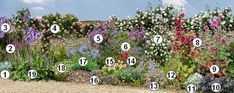 How to flower a sunny south wall in the garden Horticulture, Garden Design, Garden Online, Plants, Vintage Garden, Rose Cottage, Shrubs, Planters, Flowers