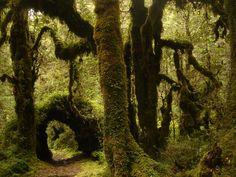 Parque Nacional Hornopiren, Chile // algún día volveré