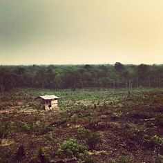 """Image by @khristway in Jambi, Indonesia. """"Save Our Forests""""."""