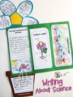 Plant life cycle activities-Writing about science in foldable flower lapbooks. Part of a complete science unit for teaching about plants for 1st, 2nd, and 3rd grade.