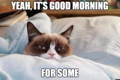 Grumpy Cat - ''I get in this weird mood sometimes where I don't want to talk to anybody and just want to be left alone. I call this mood, 'Awake'.'' (The Official Grumpy Cat) Grumpy Cat Quotes, Funny Grumpy Cat Memes, Funny Cats, Funny Animals, Cute Animals, Funny Memes, Funniest Animals, Funny Quotes, Dog Quotes
