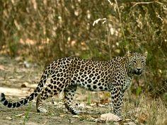 Chakrasila Wildlife Sanctuary - in Assam, India