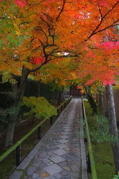 Kyoto 秋の西芳寺参道