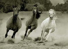 Running Horses.   See More Pictures