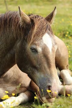 "theperfectworldwelcome: "" mistymorningme: ""  Horse | Flickr - Photo Sharing! "" Beautiful !!! \O/ """