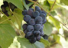 Uvas, 8 beneficios de su consumo