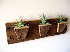 Air Plant Holder Planters Tillandsia air plants by TheBarnYardShop, 48.00