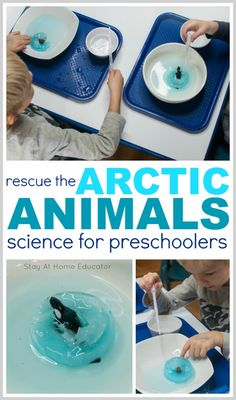 Arctic Animals Rescue Fine Motor Activities - Stay at Home Educator - Looking for some science activities for preschoolers? This one fits into your Arctic theme, polar a - Preschool Science Activities, Winter Activities For Kids, Preschool Themes, Motor Activities, Polar Animals Preschool Crafts, Animal Activities For Kids, Preschool Winter, Artic Animals, Arctic Animals For Kids