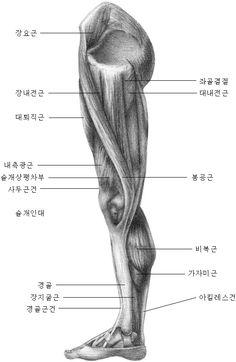 서울인체조형학원 - 인체해부드로잉 Eye Anatomy, Gross Anatomy, Human Body Anatomy, Anatomy Poses, Anatomy Study, Anatomy Drawing, Human Drawing, Basic Drawing, Body Drawing