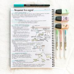 https://www.instagram.com/p/Bb9XMhyg-3w/?taken-by=studytee