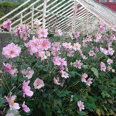 Garden Inspiration, Plants, Flora, Plant, Planting