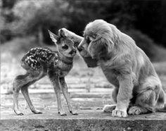 Un mignon petit faon et un beau chien au poils longs !! Plus