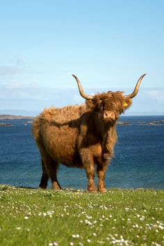 Friendly welcome awaits you in Scotland. Win a trip to Scotland with Tenon Tours to discover historic castles, beautiful lochs and majestic glens.