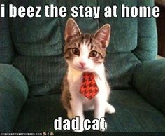 i beez the stay at home   dad cat