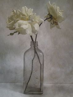❀ Blooming Brushwork ❀ - garden and still life flower paintings - White Roses by Sarah Jarrett, via Flickr
