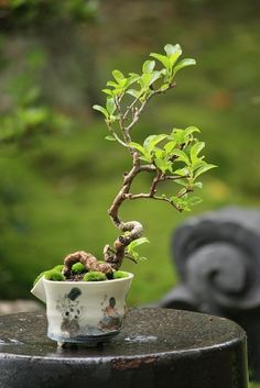 bonsai           Here are some great fairy & mini's pins form other users. If you want to see our stuff click below.    Also Find us on:  http://hometownvintage.com http://autopartspuller.com http://preppersencyclopedia.com @HomeTownVintage @autopartspuller @preppershowto http://facebook.com/hometownvtg http://facebook.com/AutoPartsPuller