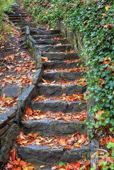 ✯ Step Into Autumn
