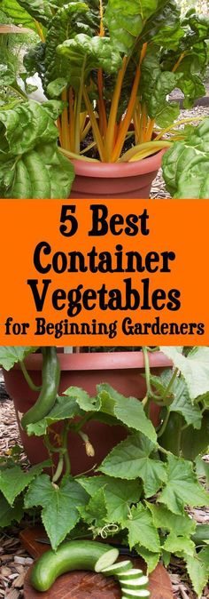 Here are my 5 favorite container vegetables for beginning gardeners, plus container gardening tips and tricks for a great harvest. #vegetablesgardening