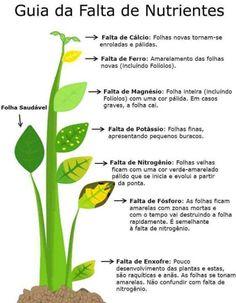 deficiencia de nutrientes em plantas - Pesquisa Google