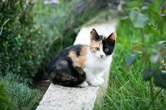 If you are a pet owner with a yard, it is to your collective advantage to make your yard as pet-friendly as possible and create a space you both can share comfortably. That is not to say that your yard replaces the daily walk, but when your dog, or cat, has more freedom, both of your lives are more enjoyable.