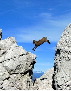 Triglavski National Park, Slovenia Copyright: Darko Visek