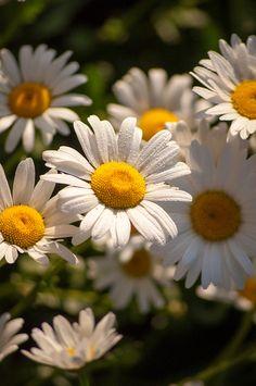 flower of friendship