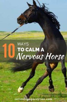 10 Ways to Calm a Nervous Horse - Seriously Equestrian Horseback Riding Tips, Horse Riding Tips, Horse Behavior, Dressage, Horse Information, Les Reptiles, Horse Exercises, Horse Care Tips, Horse Facts
