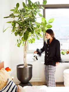 inside Chillhouse Founder Cyndi Ramierz's New York apartment//indoor plant ideas Garden Plants, Indoor Plants, Cream Aesthetic, New West, West Village, Fulton, We The People, Old And New, Tours