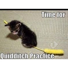 I know you don't like cats P, but you do like Harry Potter. I know you don't like Harry Potter Jackson, but you do like cats. Cute Cats, Funny Cats, Funny Animals, Cute Animals, Adorable Kittens, Cats Humor, Funny Horses, Funniest Animals, Cat Fun