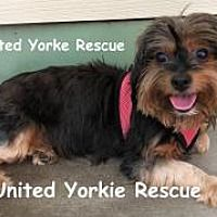 Pin By Lea Nichols On Helping Precious Animals Yorkshire Terrier
