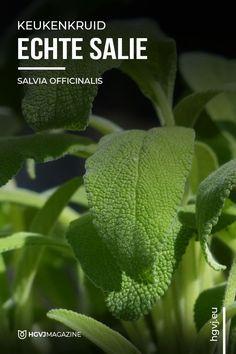 Salvia Officinalis, Edible Flowers, Herb Garden, House Plants, Planting Flowers, Plant Leaves, Olie, Herbs, Fruit