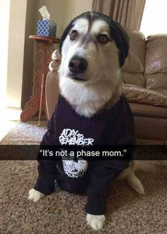 Funny Dog Memes That Will Cure Your Bad Day - 14 #funnydogs #dogsfunnybad
