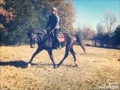 Windsor getting back in shape :-) in our backyard Mississippi ...