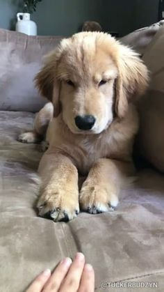 Animals Discover cute dogs and puppies Pet Photography Funny Animal Videos, Cute Funny Animals, Cute Baby Animals, Funny Dogs, Animals And Pets, Dog Videos, Funny Puppies, Cute Videos, Cute Puppy Videos