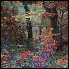 Forest Colours. Explore Oct 15, 2012 #289 by Tim Noonan, via Flickr