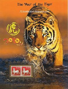 Year of the Tiger. Get in depth info on Chinese Tiger personality and traits at http://www.examiner.com/article/the-chinese-zodiac-the-chinese-horoscope-astrology-the-year-of-the-tiger For a more lighthearted look at the Chinese Tiger go to http://www.examiner.com/article/a-funny-look-at-the-chinese-zodiac-sign-of-the-tiger