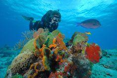 Cozumel, un regalo submarino El principal espectáculo de Cozumel está en las profundidades del océanoEste arrecife tiene una profundidad promedio de entre 10 y 30 metros.